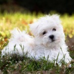 Top 10 Best and Most Popular Dog Breeds in the World