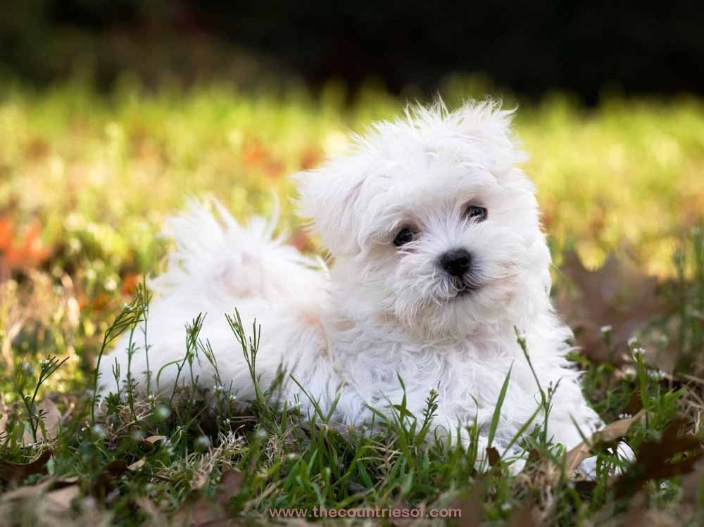 top-10-Most-Beautiful-Dog-Breeds-World-Ever